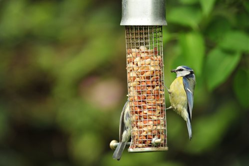 Continue Feeding Our Feathered Friends!