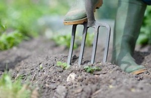 fork-in-soil-greenmaster-lawn-care