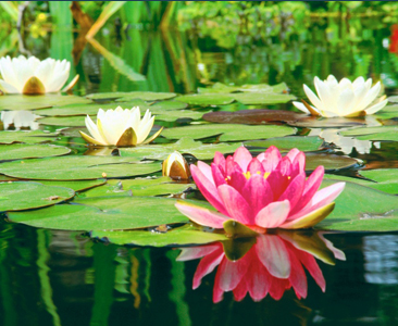 Its Time To Bring Your Pond Back To Life