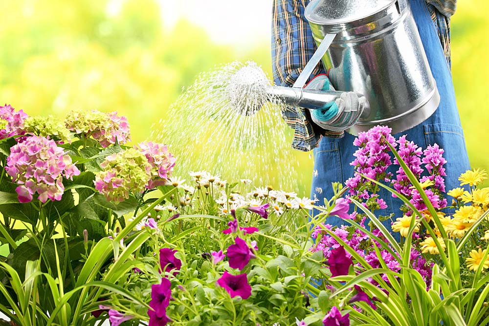 Water your way to happy plants mh landscapes - Summer time gardening tips ...