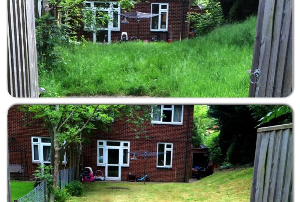 Hayley's Garden Clearance