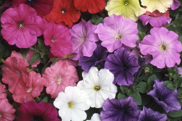 Add A Splash Of Colour To Your Garden