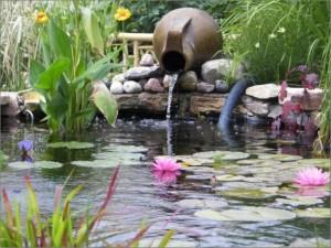 just_pond_plants