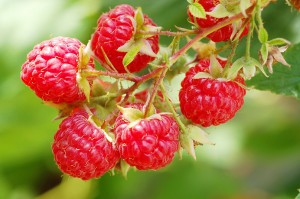 >Raspberries make a great treat and grapes turn water into wine.
