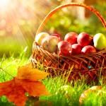 Autumn_Apple_Orchard__86518.1405455930.1280.1280