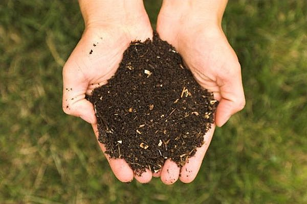 Start Your Compost