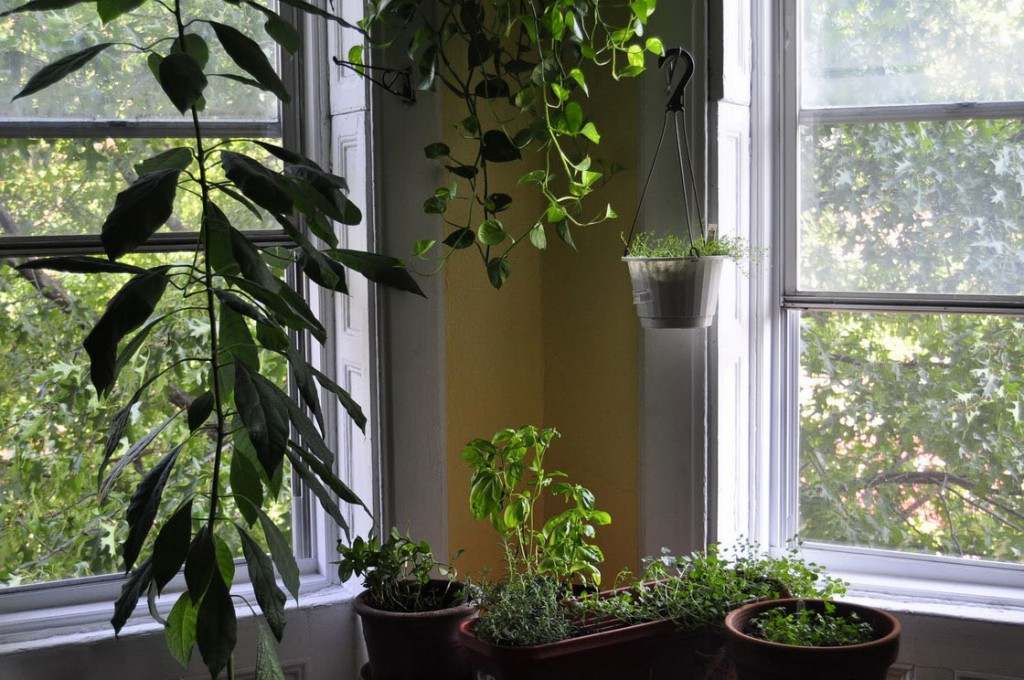 hung-living-room-plants-design